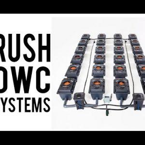 IWS Rush RDWC